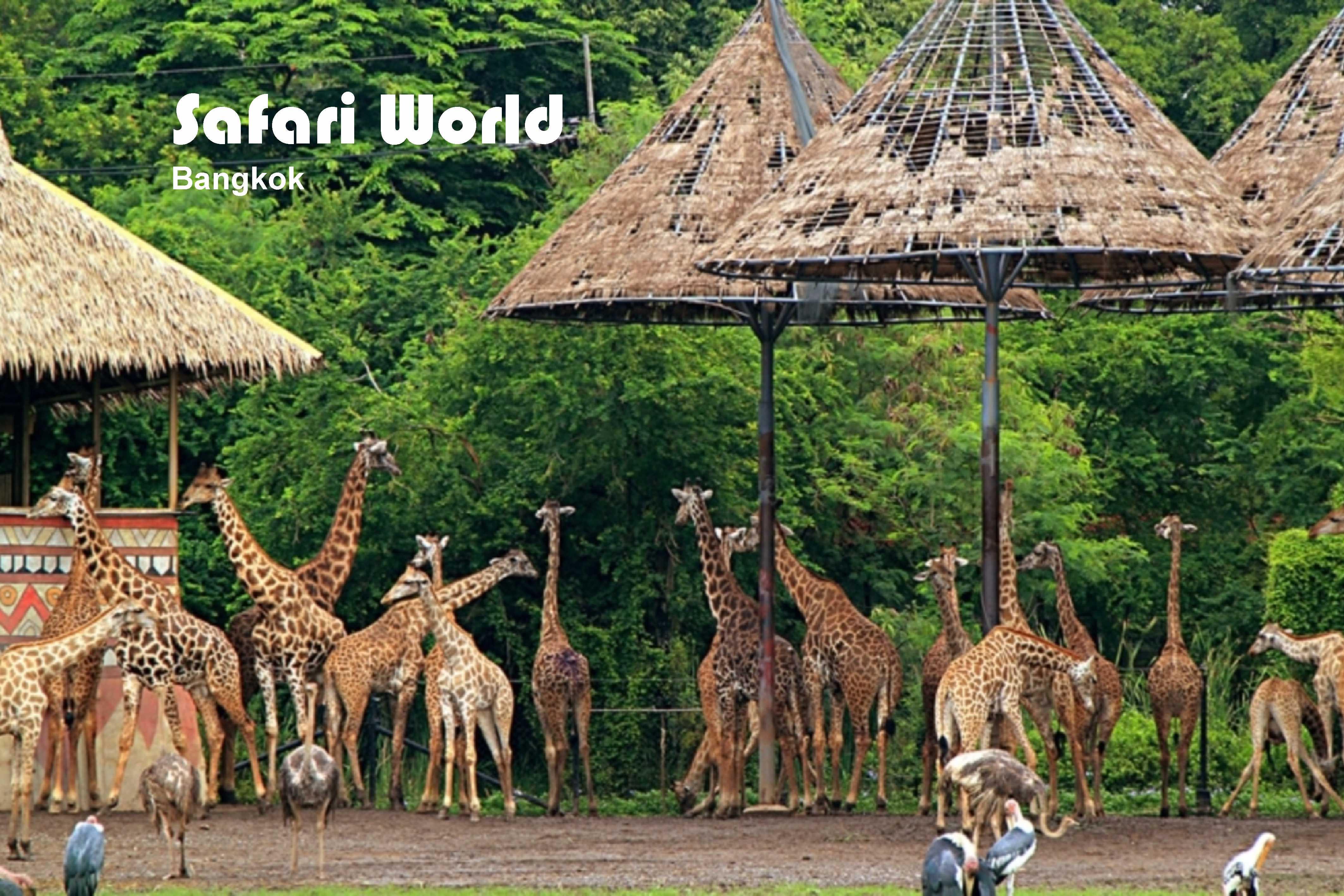 11Safari World