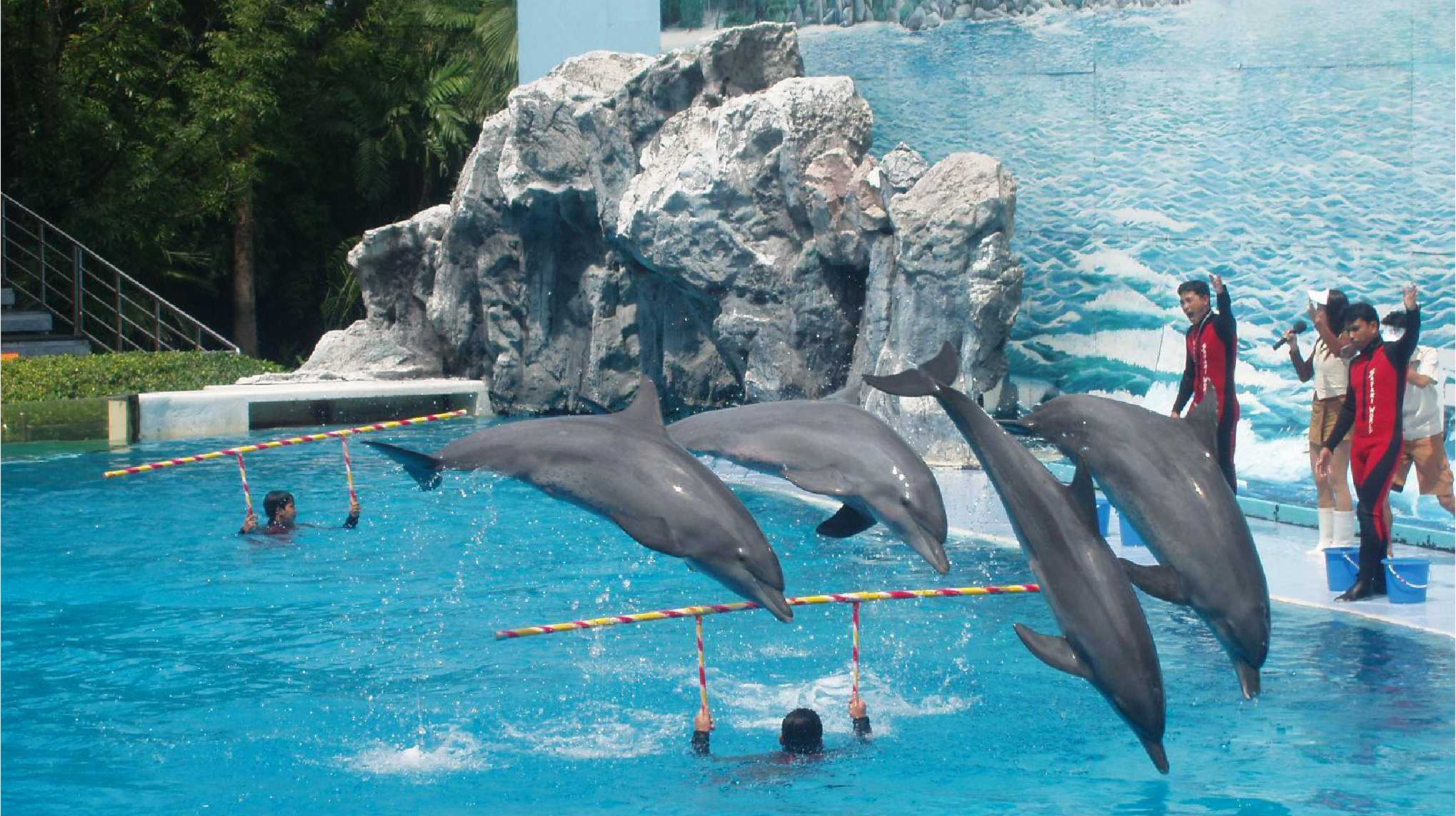 Dolphin World Pattaya