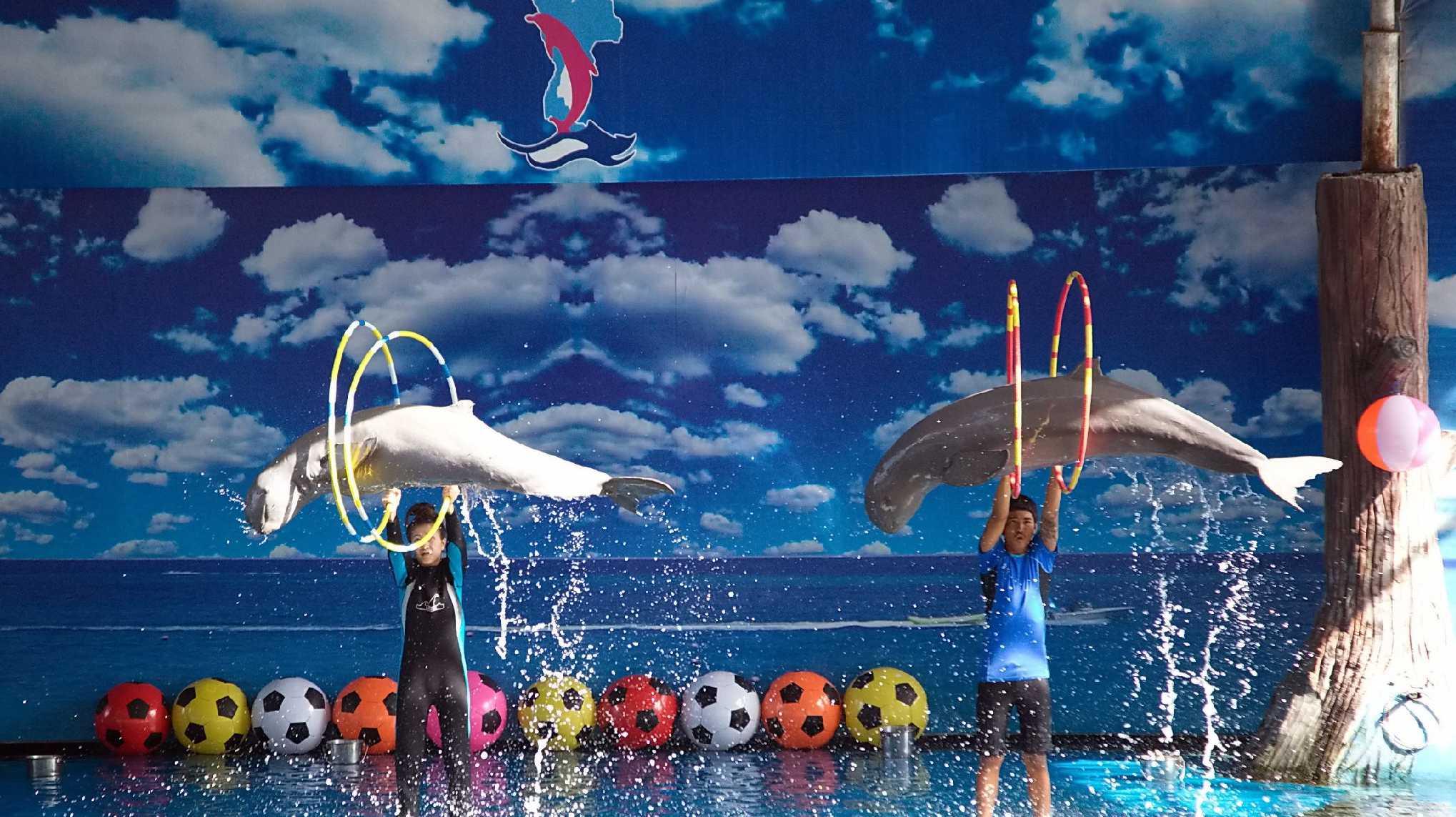 11Dolphin World Pattaya