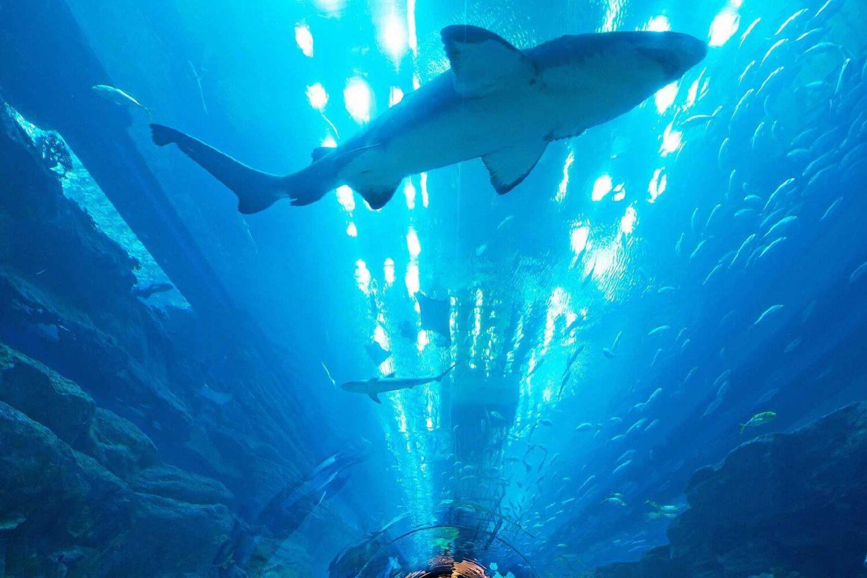 11Dubai Aquarium and Underwater Zoo