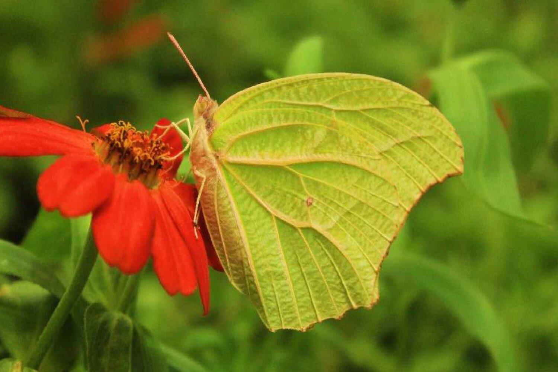 11Dubai Butterfly Garden