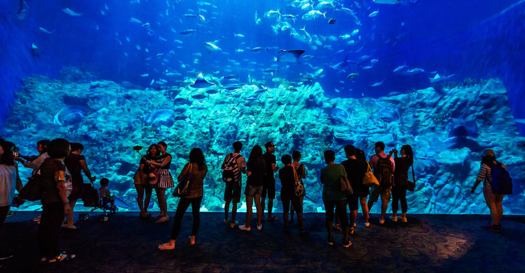 Ocean Park Grand Aquarium