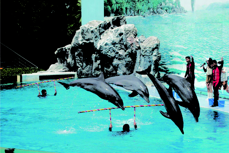 11Pattaya Dolphin Show