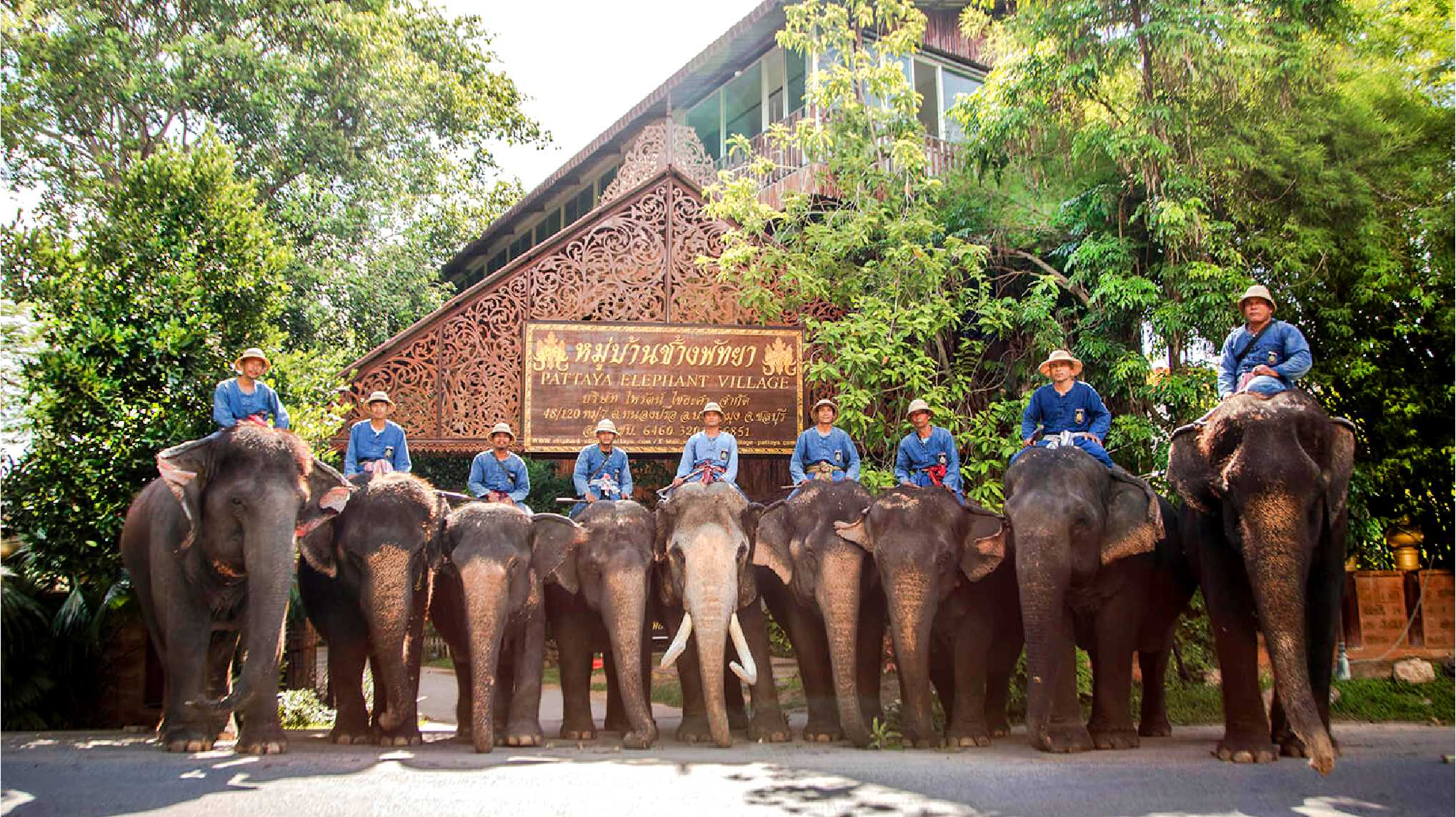 11Pattaya Elephant Village