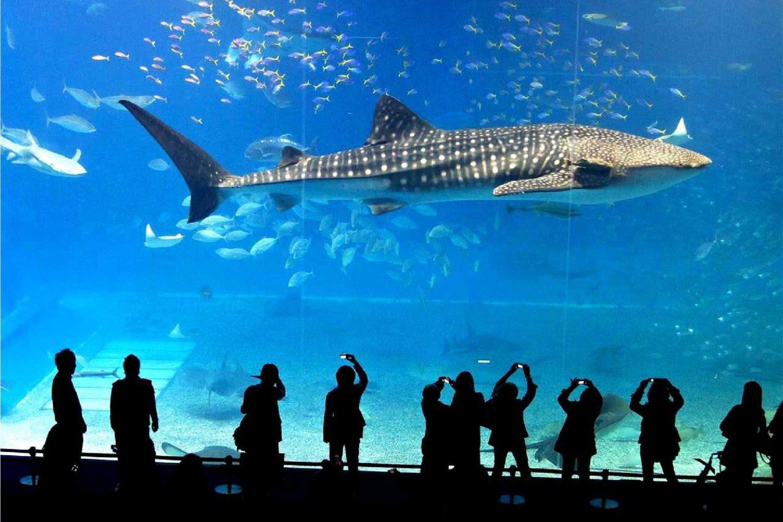 11Sea Life Ocean World