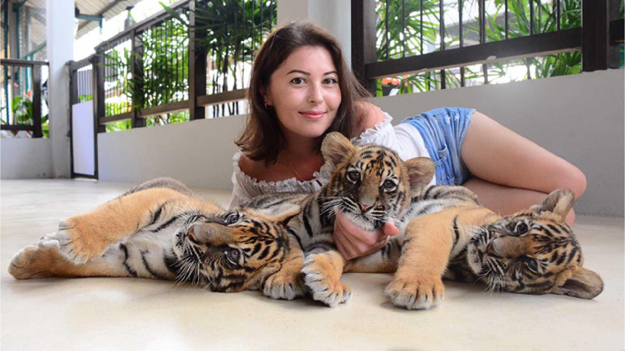 11Tiger Park Pattaya
