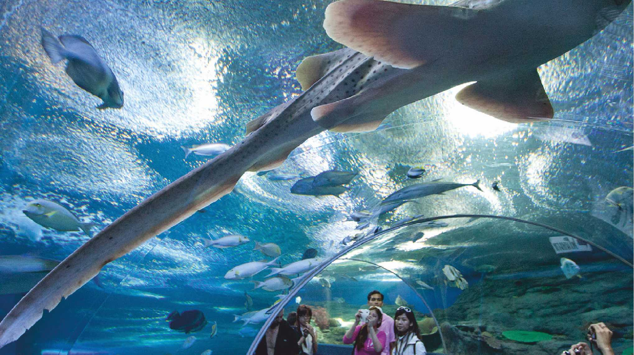 Top Tourist Attractions of Pattaya