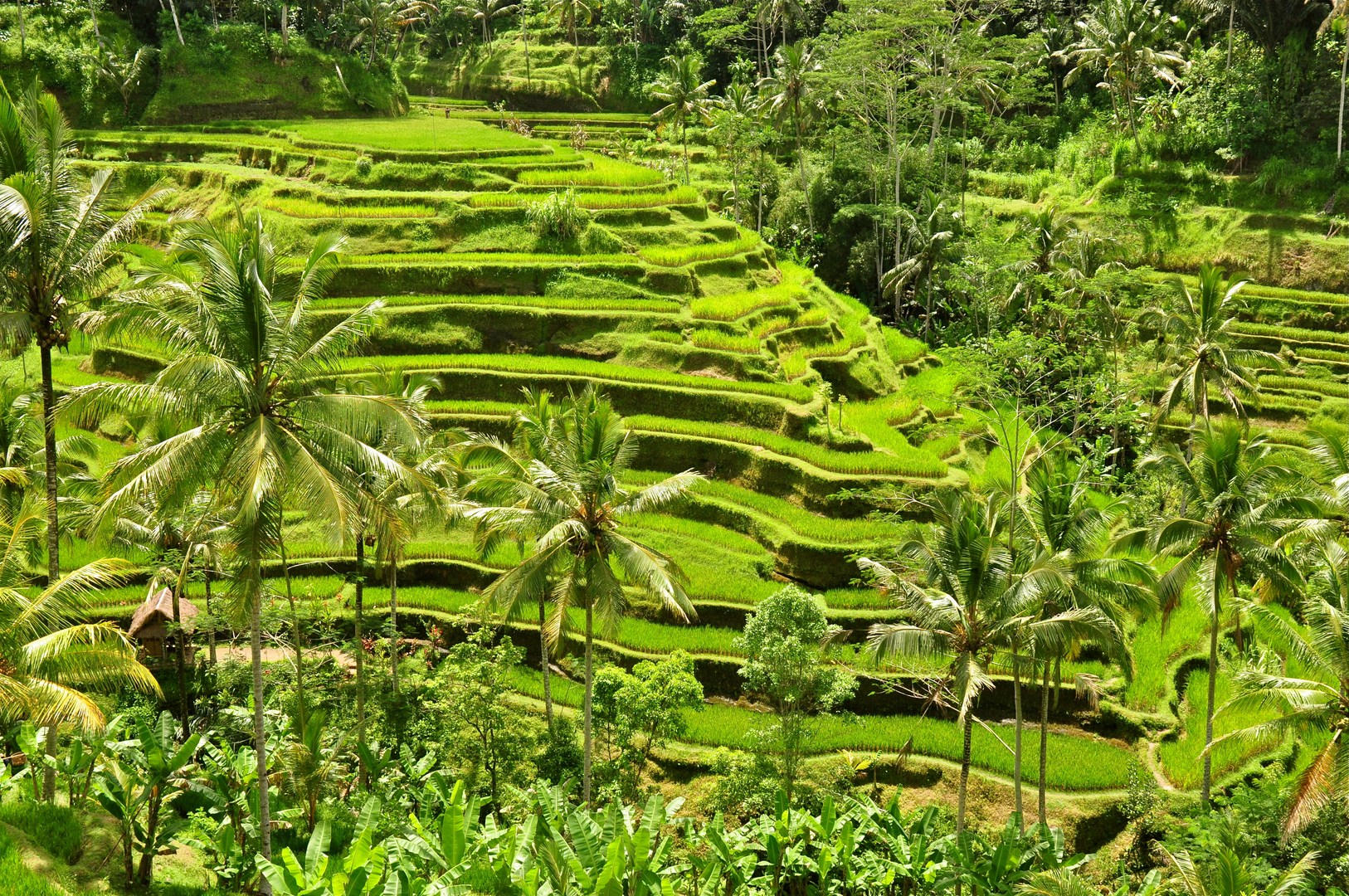 Ubud Tegallalang Rice Terrace