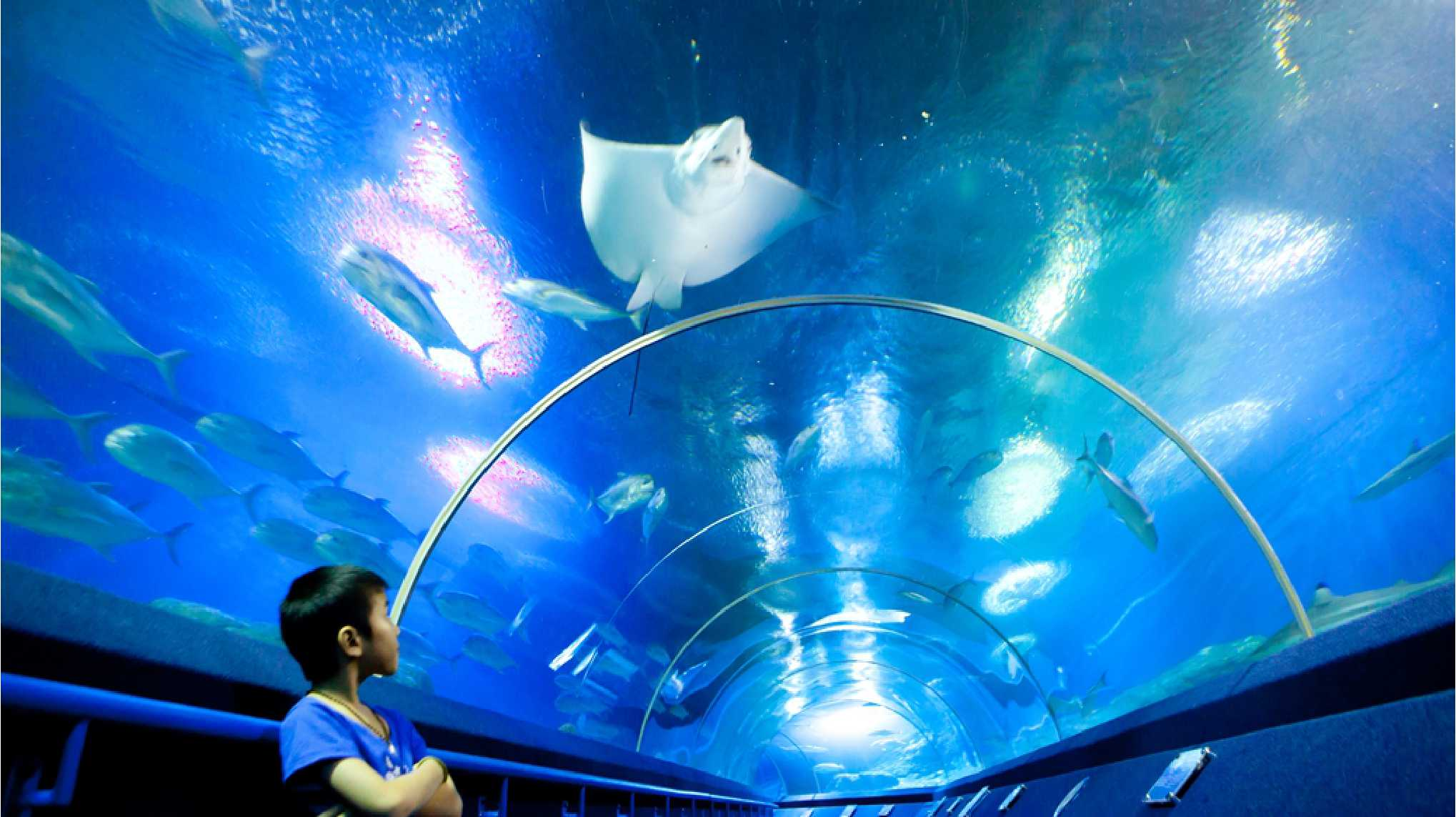 11Underwater World Pattaya